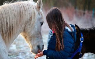 Los caballos reconocen las emociones humanas. Foto: Pixabay