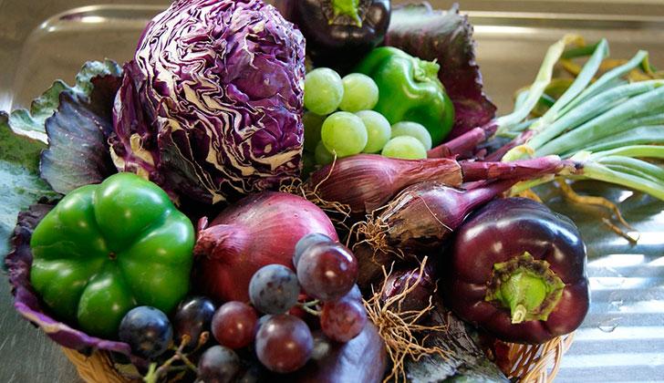 importancia de los alimentos en la salud humana