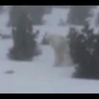 """Fotos y video del """"Yeti"""" en una montaña nevada de España viralizan en horas, pero son refutados casi en el mismo día"""
