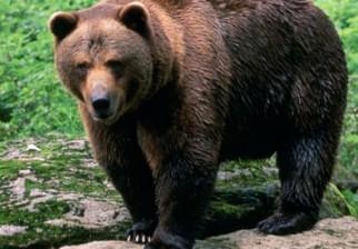 Los osos de España han dejado de hibernar y la ciencia se pregunta si es por el cambio climático o por exceso de alimentación