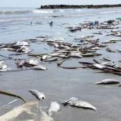 Autoridades analizan calidad del agua para determinar causa de mortandad de peces en Montevideo