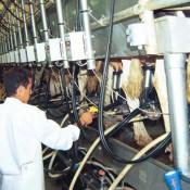 Gobierno otorgará línea de crédito a productores lecheros jóvenes, de entre 21 y 40 años