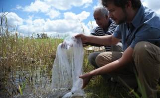 Parte de las acciones que toda la ciudadanía para frenar el zika, es eliminar todos los lugares en donde se pueda estancar agua, y convertirse en criadero del mosquito aedes aegypti. Foto: Wikimedia Commons.
