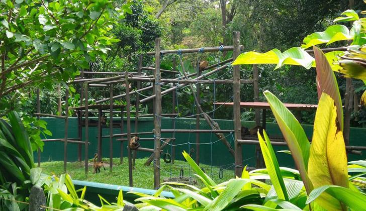A pesar de que los recintos y jaulas donde están confinados los animales toda su vida, estos zoológicos en Costa Rica cumplen con las normas internacionales. Foto: Zoológico Simón Bolívar en San José, Costa Rica.