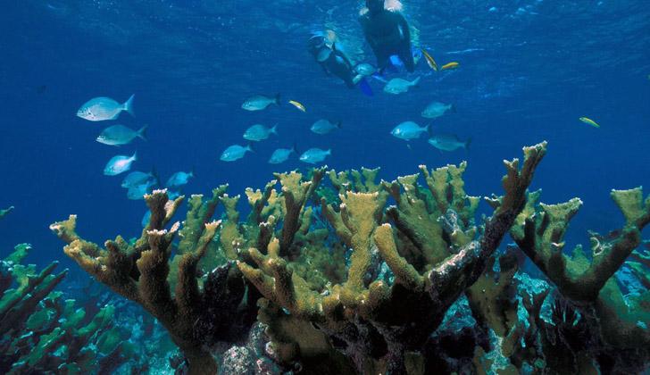 Corales en el Parque Nacional Bahía Vizcaíno, en Miami. Foto: Wikimedia Commons.
