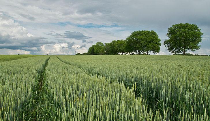 Los efectos del cambio climático en la agricultura y cadena alimentaria pueden provocar 500.000 muertes en 2050. Foto: Pixabay