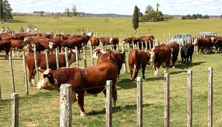 Ministerio de ganader a agricultura y pesca restringe uso for Ministerio de ganaderia