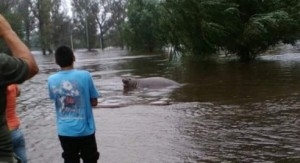 Un elefante marino de paseó por las calles de Mercedes