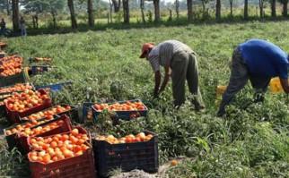 Para evitar un nuevo aumento de la inflación, Economía analiza importar productos de granja cuyas cosechas se vieron afectadas por inundaciones