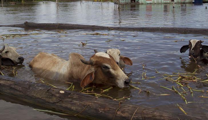 """""""Estamos tratando de hacerle llegar comida a los productores lo más rápido posible"""", afirman autoridades del MGAP. Fotografía con fines ilustrativos: pbs.org."""