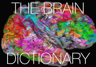Crean un mapa semántico del cerebro que podría servir para leer la mente de las personas