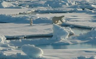 Foto: alaskaconservation.org.