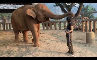 Elefante se duerme tras una canción de cuna de su cuidadora