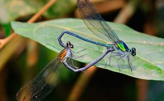Umma gumma, una de las nuevas especies. Foto: EFEVerde