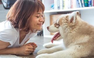 Los perros y sus dueños sincronizan sus corazones Foto: Pixabay