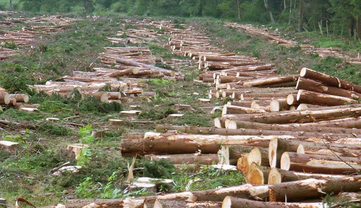 Cada año en el mundo se deforesta el equivalente a la superficie de Panamá. Foto: Wikimedia Commons.