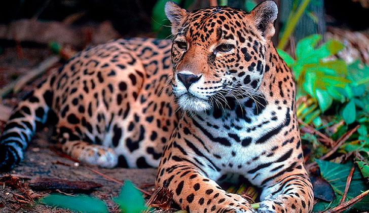 Día Mundial del Medio Ambiente 2016 propone luchar contra el comercio ilícito de fauna y flora silvestre . Foto: Pixabay