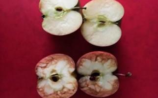 Maestra explica a sus alumnos cuánto duele el bullying utilizando dos manzanas.