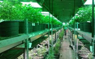 Un invernadero dedicado exclusivamente a cultivar marihuana en el estado de Colorado, Estados Unidos. Foto: Pixabay.