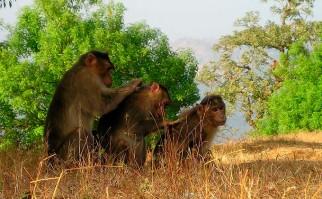 Los monos, al igual que los humanos, reducen su círculo de amistades a medida que envejecen. Foto: Pixabay