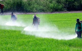 La UE aprobó la importación de soja transgénica. Foto: Shutterstock
