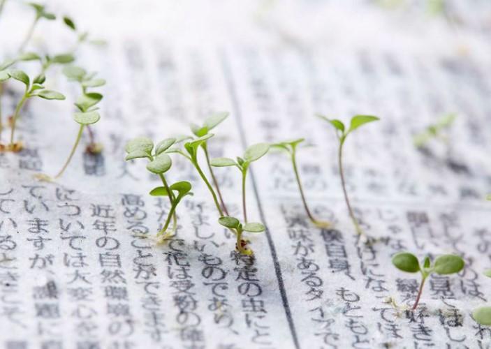 Impresionante imagen de las plantas floreciendo del papel de diario.