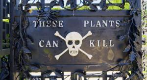 Este jardín está sembrado enteramente con plantas venenosas