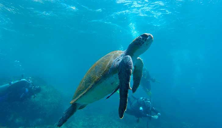 En el Día Mundial del Turismo la organización Protección Animal Mundial invita a hacer turismo consciente. Foto: Pixabay