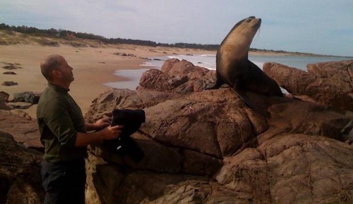 Playa-foca