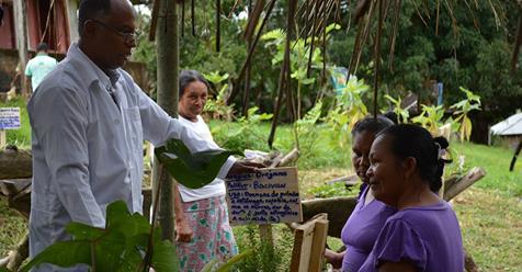 medico plantas medicinales - Médico nativo aboga por la medicina natural