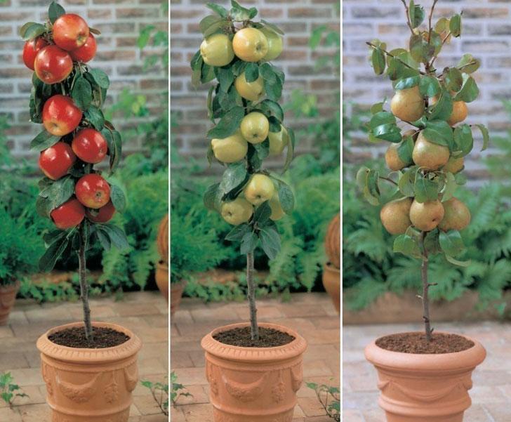Como tener tu propio rbol frutal en espacios reducidos for Arboles frutales en maceta