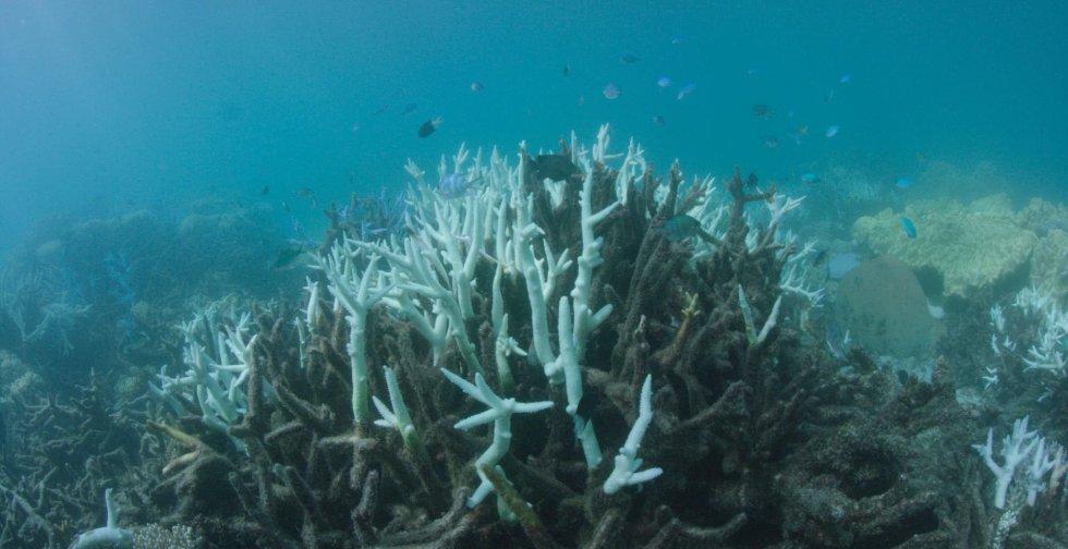 barrera coral 4