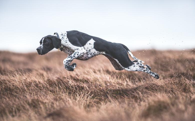1 lugar de la categoría Perros Trabajando, Sarah Caldecott, UK