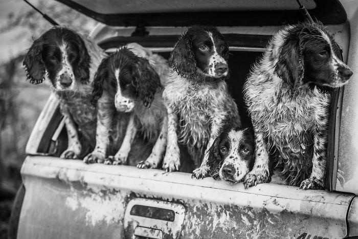 2 lugar en Perros trabajando, Lucy Charman, Reino Unido