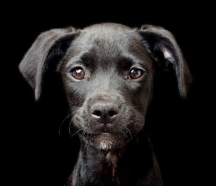 2 lugar en la categoría Cachorros, Tracy Kirby, Irlanda