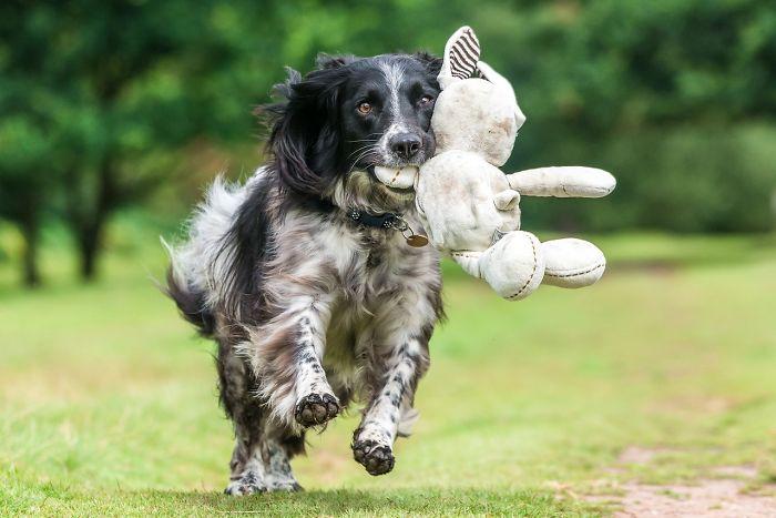 3 lugar en Perros jugando, Will Holdcroft, Reino Unido