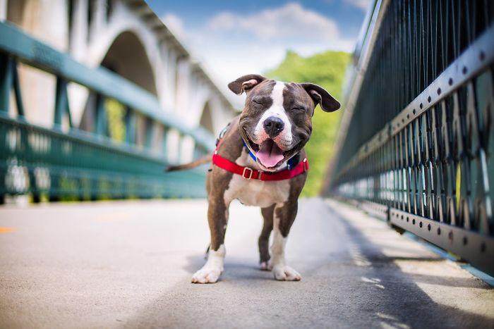 3 lugar en la categoría Perros rescatados Kaylee Greer EEUU