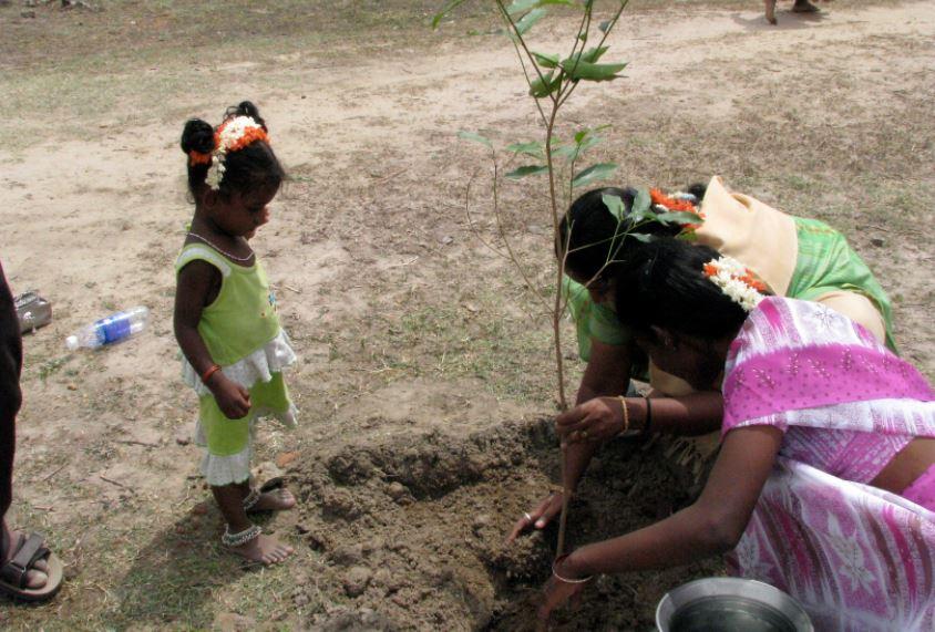 En India han plantado 66 millones de árboles en sólo 12 horas