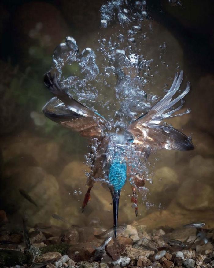 Por Fahad Al-Enezi, España. Categoría Comportamiento De Aves