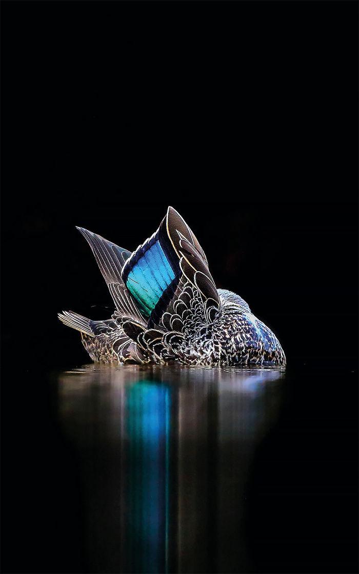 Por Georgina Steytler. Australia. Ganadora Del Oro En La Categoría Imágenes Creativas