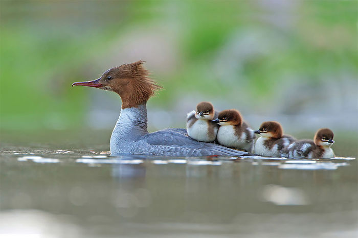 Por Jonathan Gaunt, Reino Unido. Categoría Comportamiento De Aves