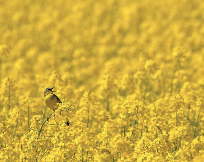Por Robert Szafranek, Polonia. Categoría Pájaros En El Ambiente