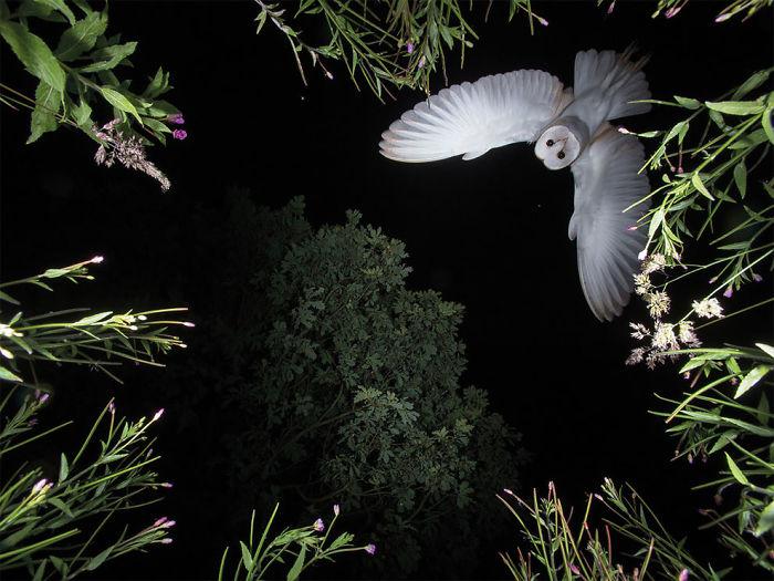 Por Roy Rimmer, Categoría Comportamiento De Aves Reino Unido