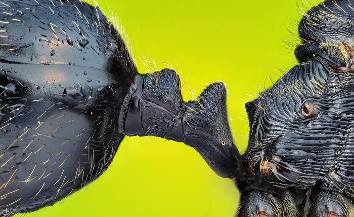 El peciolo que conecta el abdomen y el tórax de una hormiga, Izmir, imagen distinguida