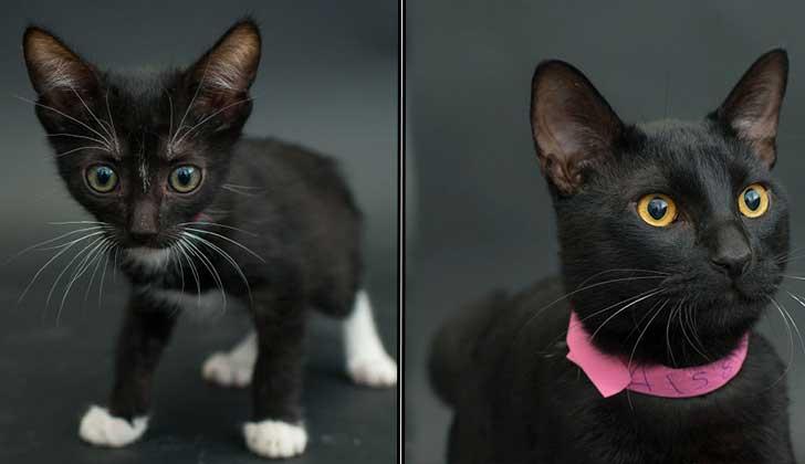 """""""Black Cat Project"""", el proyecto fotográfico que busca ayudar a los gatos negros a ser adoptados."""