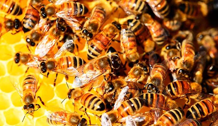 MVOTMA: la contaminación genética y el uso de agroquímicos afecta al mercado de la miel. Foto ilustrativa. Pixabay