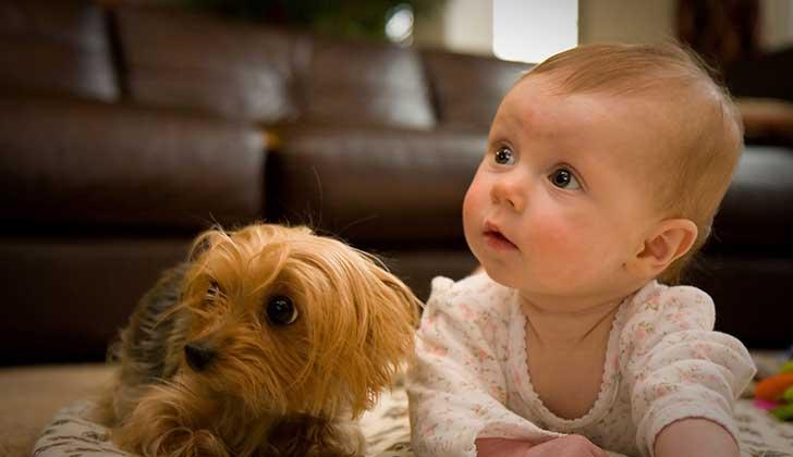 Los perros pueden proteger contra el eczema y el asma infantil. Foto: Wikimmedia