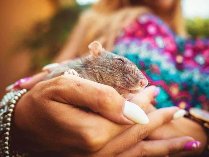 Foto: Rachel Totaro / La Collina dei Conigli