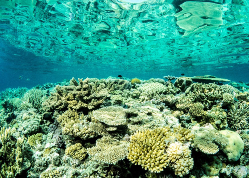 Arrecifes de coral decolorados a causa del calentamiento global. Foto: Peter J Mumby / University of Queensland