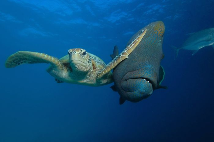 12 Ganador de la categoría Bajo el mar Bofetada, Troy Maine